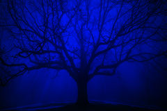 Árvore surreal na névoa do azul do inverno Imagem de Stock Royalty Free