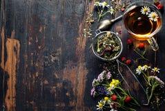 вливания horsetail фокуса equisetum чашки arvense чай стеклянного травяного naturopathy селективный Стоковое Изображение