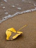 Лист высушенные желтым цветом на песчаном пляже Стоковые Изображения