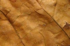 мертвая сухая текстура макроса листьев Стоковая Фотография