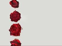 письма граници любят розовую Стоковое Изображение