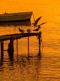Птицы танцев, и шлюпка на заходе солнца Стоковые Изображения