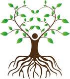 人与根的爱护树木 库存图片