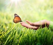 蝴蝶在手中在草 免版税库存照片