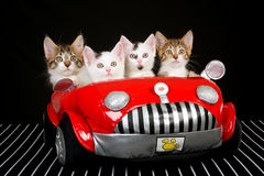 4 Cute kittens in red soft toy car Stock Images