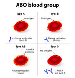 ABO Blood groups Royalty Free Stock Images