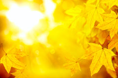 Abstract autumn yellow leaves nature background Stock Image