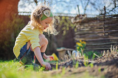 Adorable preschooler girl in yellow cardigan planting flowers in spring sunny garden Royalty Free Stock Photo