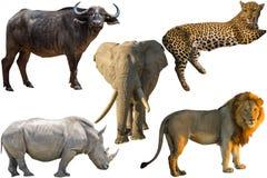 African Big Five Royalty Free Stock Photos