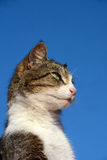 Alert cat Stock Photo