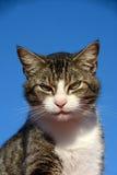 Alert cat Stock Images
