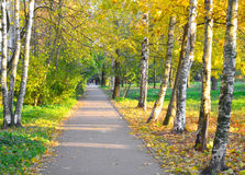 Alley in autumn. Royalty Free Stock Images