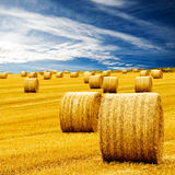 Amazing Golden Hay Bales Stock Image