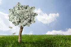 Amazing money tree on grass with falling leaves Royalty Free Stock Photos