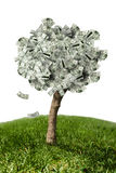Amazing money tree on grass and white background Royalty Free Stock Images