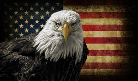 American Bald Eagle on Grunge Flag Royalty Free Stock Images