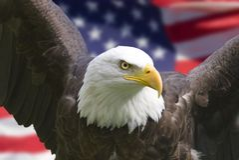 Amerikaanse adelaar met vlag Royalty-vrije Stock Afbeeldingen