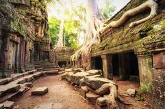 Angkor Wat Kambodja De Khmer oude Boeddhistische tempel van Ta Prohm Royalty-vrije Stock Foto's