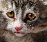 Animal Abuse Royalty Free Stock Image