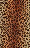 Animal print Stock Photography