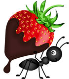 Ant carrying strawberry with chocolate sauce Royalty Free Stock Image