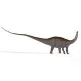 Apatosaurus aka Brontosaurus Stock Image