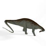 Apatosaurus aka Brontosaurus Royalty Free Stock Photos