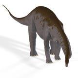 Apatosaurus aka Brontosaurus Stock Photo