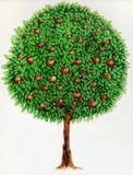 Apple tree drawing Stock Photo