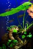 Aquarium plants Stock Image