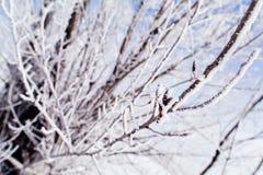 Arbres congelés macro Image libre de droits
