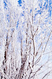 Arbres congelés macro Photographie stock
