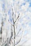 Arbres congelés macro Images libres de droits