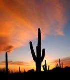 Arizona Sunset Royalty Free Stock Images