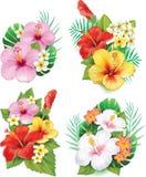 Arrangement from hibiscus flowers Stock Photo