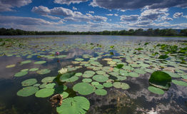 Asia China, Beijing, Old Summer Palace, lotus pond Stock Photography