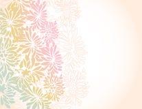 Asian chrysanthemum flower border background Stock Photography