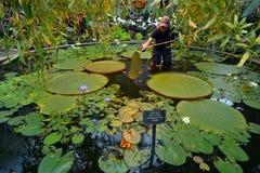 Auckland-Winter-Gärten in Auckland Neuseeland Lizenzfreies Stockbild