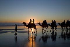 australia plażowi broome wielbłądy zachodni Obrazy Stock