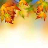 Autumn Royalty Free Stock Photos
