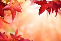 Autumn bokeh background with red leaves Stock Photo