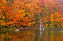 Autumn colored fall leaves reflected in Beaver Pond Stock Photos