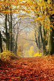 Autumn, fall forest. Path of red leaves towards light. Royalty Free Stock Photography