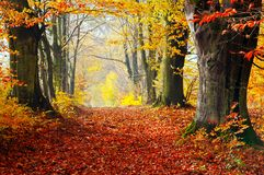Autumn, fall forest. Path of red leaves towards light. Royalty Free Stock Images