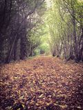Autumn or fall path through the forest. Royalty Free Stock Images