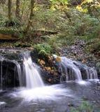 Autumn Falls Royalty Free Stock Image