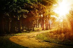 Autumn forest, lit by the sun Royalty Free Stock Photos