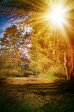 Autumn forest, lit by the sun Royalty Free Stock Images