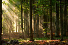 Autumn forest trees. nature green wood sunlight backgrounds. Royalty Free Stock Photos