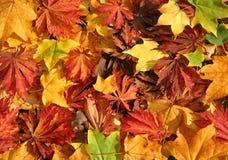 Autumn Leaves Stock Image